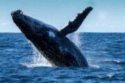 Биткоин-кит скупил более 4 000 BTC при падении рынка