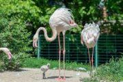 В Ростове впервые за десять лет появились птенцы фламинго: Природа: Моя страна: Lenta.ru
