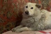Найденному в луже мазута после взрыва заправки псу Беляшу сделали операцию: Люди: Моя страна: Lenta.ru