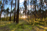 Заброшенные сельскохозяйственные земли назвали преимуществом России: Бизнес: Экономика: Lenta.ru