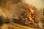 Эрдоган объявил пострадавшие от лесных пожаров регионы зоной бедствия: Происшествия: Мир: Lenta.ru