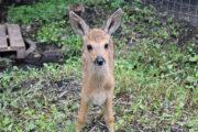 В зоопарке Пензы появились детеныши карликовой овцы: Природа: Моя страна: Lenta.ru
