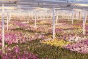 Под Смоленском появится целая плантация с орхидеями: Достижения: Моя страна: Lenta.ru