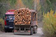 Продажи российского леса за рубеж выросли после запрета Путина: Госэкономика: Экономика: Lenta.ru